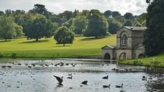 Lake full of birds. Kedleston (chris@durham) Tags: kedleston hall derbyshire