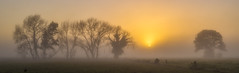Good morning! (zebedee1971) Tags: winter farm farmland trees tree fog foggy mist misty morning dawn sunrise sun sunlight landscape land grass light orange fence cloud