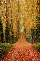 Prmices d'automne 2 (version verticale) (JDAMI) Tags: chutedesfeuilles automne feuillesmortes jaune rouge saisons arbres alle nature extrieur vert verdure chemin contre somme 80 picardie hautsdefrance france nikon d600 tamron 2470