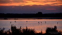 """""""al tramonto 2"""" (Nicola Armari) Tags: salina comaccio ferrara parco delta po"""