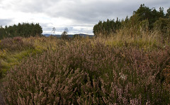 Views from Littlemill (duncan_ireland) Tags: landscape scotland forestry commission inverness strathnairn forestrycommission littlemill inverarnie littlemillforestrycommission