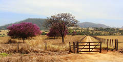 Long Journey Back Home (osvaldoeaf) Tags: road pink trees brazil sky mountains home nature brasil clouds rural landscape back long farm natureza journey cerrado goinia gois bewiahn