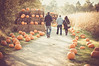 Pumpkin Parade (MMortAH) Tags: york autumn fall halloween pumpkin 50mm nikon yorkshire 14 north spooky horror maze patch nikkor themepark d90