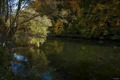 Star River Neckar (KF-Photo) Tags: autumn herbst bltter spiegelung neckar sterne baggersee herbstbltter epplesee kirchentellinsfurt neckarufer sternenbltter sternenfluss