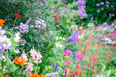 DSC_2113 (wheelerdealer69) Tags: flowers blue red orange flower gardens butterfly garden landscape photo nikon hummingbird purple salvia zinnia dreamgarden nikond7000