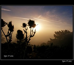 The Prickly One. (Picture post.) Tags: morning autumn trees sun sunlight mist green nature silhouette clouds sunrise landscape countryside thistle bluesky hills paysage arbre goldenhour brume mygearandme mygearandmepremium