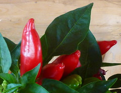 Peppers (Peggy2012CREATIVELENZ) Tags: red canada green leaves closeup shiny gift alberta peppers bluebirdestates peggy2012creativelenz p1300918a