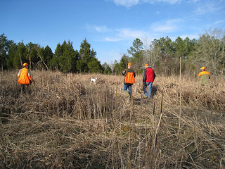 Private Alabama Quail Hunting - Davis Quail 20