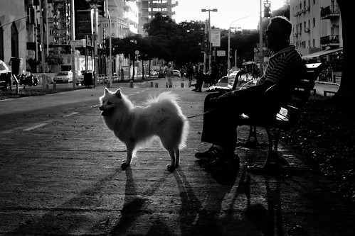 white dog black shadows