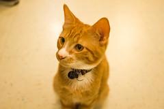 Smusi (cgc76) Tags: portrait pet cat focus sony sigma 30mm nex nex3