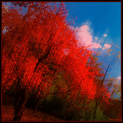 Red Tree Blue Sky (Tim Noonan) Tags: blue autumn red sky motion colour tree texture nature leaves clouds digital photoshop pond filter balance hue shining tone mosca equilibrium hypothetical tistheseason vividimagination artdigital greenscene shockofthenew stickybeak newreality sharingart maxfudge awardtree maxfudgeawardandexcellencegroup daarklands magicunicornverybest exoticimage digitalartscene netartii donnasmagicalpix vividnationexcellencegroup