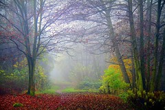 The Power of Now (Mah Nava) Tags: autumn trees mist nature leaves fog forest germany deutschland nebel path herbst natur now wald bltter bume weg thepath       thepowerofnow    thepowerofnow