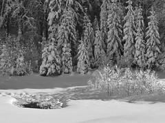 Winter idyll/ Zimska idila (Silva Predali) Tags: winter white snow landscape ngc belina slovenia npc zima spruce idila skocjan ruby2 dolenjska pokrajina nikond7000 ruby10 ruby5 silvyp