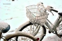 First snow (Electra K. Vasileiadou) Tags: winter white snow cold weather bike bicycle japan tokyo nikon asia 日本 東京 雪 冬 天気 自転車 アジア d3100 gettyimagesjapan13q1