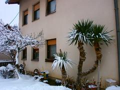 Winter tropics:) (seanfderry-studenna) Tags: croatia balkans postwar hrvatska balkan petrinja
