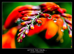 After the rain... (LandAndNightscape) Tags: ocean reunion island des indien réunion forêt flore plaine palmistes bébour