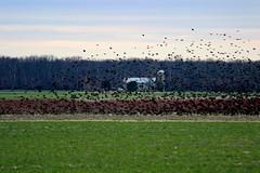 'birds of Flight'  1/10 (JRG Imaginarium ) Tags: blue red house tree green bird birds animal landscape bush farm wildlife silo 100 swarm 1365