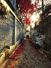 Samcheong-dong Alley (edward.kim) Tags: city trip travel autumn light sunset red vacation color fall leaves geotagged fun asia korea