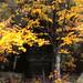 """The Corner Tree"" by James Bullard"