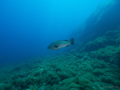 "Paisaje Murciano - Cabo de Palos; Spain ""Bajo de Piles I"" (JuanAnd-erwater) Tags: seleccionar"