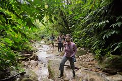 Hiking in the Amazon Jungle, Ecuador
