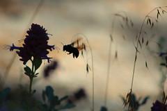 Sombras. (Gerry077) Tags: sombra flower macro nature naturaleza mexico