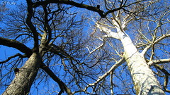 Telperion & Laurelin by QFS_mlp (QueenFaeeStudio) Tags: canon green villareale prato sole sun riflessi reflexes profondit depth monza coloridautunno outlooks diagonals prospettive diagonali sky tree winter