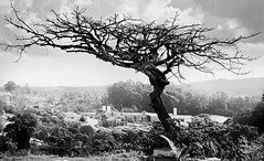 Votorantim - So Paulo (Edinei Matos) Tags: sony brazil sopaulo votorantim countryside outside outdoor monochrome blackandwhite bw contrast tree sky trunk branches nature wandering trip travel tour ancient old
