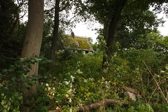 Wee cottage in the woods (Heathermary44) Tags: outdoor cottage thatched moss weeds forest woods desolate charming denmark
