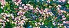 E-Colorization Pattern (ⓅⒶⓎⓅⒶⓊⓁ) Tags: ecoli ballproject molecules plague disease color