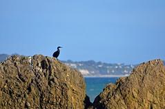El Matador State Beach (Anosmia) Tags: malibu california elmatadorstatebeach seabirds pacificocean