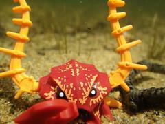 Crab Warrior Reaching (s.kosoris) Tags: skosoris pentaxoptiowg1 wg1 pentax camp camping lake forklake lego macro minifig minifigure atlantis legoatlantis crabwarrior crab underwater sand