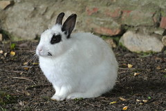 DSC_3404 (mavnjess) Tags: 15 june 2016 vicenza italy italia coniglio coniglios rabbit rabbits bunny bunnies