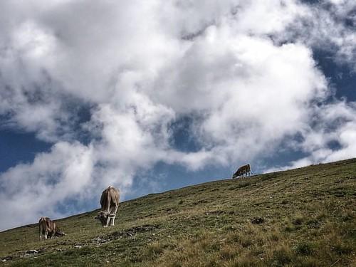 #clouds #cloudsporn #cow #mucche #pascolo #alpi #alps #goldeck #carinthia