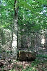 Wald-Haltestelle Wood-Stop (Spiranthes2013) Tags: waldhaltestelle woodstop forest deutschland germany becker bayern bavaria niederbayern lowerbavaria bavarianforest bayerischerwald zwiesel zwieselerwaldhaus holz wood woodstock