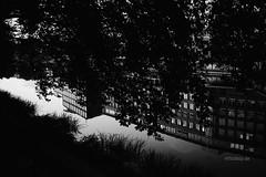 Baden gegangen (Till Billy) Tags: 59 bremen teerhof street architecture architektur spiegelung mirror weser kleine werdersee black white bw wasser water
