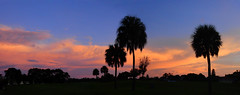 Pastel September (Jim Mullhaupt) Tags: sunset sundown dusk sun evening endofday sky clouds color red gold orange pink yellow blue tree palm outdoor silhouette weather tropical exotic wallpaper landscape nikon coolpix p900 bradenton florida manateecounty jimmullhaupt cloudsstormssunsetssunrises pastel panorama storm thunder wind rain weatherphotography photo flickr geographic picture pictures camera snapshot photography nikoncoolpixp900 nikonp900 coolpixp900