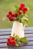 Rosas (Hada Marina) Tags: rosas rojo blanco flores red white flowers jarron