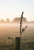 boerderij Heijerhof te Baexem (Charlotte Heynen - www.studiofotozo.nl) Tags: natuur nature boederij farm wei biologisch vrijheid sunrise zonsopkomst licjt light natural sun summer zomer zon zonlicht ochtend ochtendzon morning morninglight