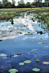 way (camillacamomilla) Tags: waterlilies way water ninfee cambodia cambogia countryside
