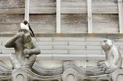 Who was it? (Picardo2009) Tags: ise japan japon oharaidori okageyokocho ave aves bird birds golondrinas pajaro pajaros swallow travel picoftheday animal urban urbanexploration
