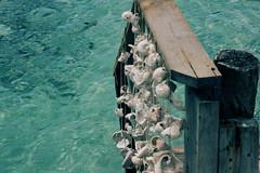 Stairway to heaven (Pablo O Palmeiro) Tags: moorea polinesiafrancesa frenchpolyneisa polynesiefrancaise lagoonarium sea water pacific ocean oceano pacifico