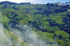 Yuanyang Rice Terraces, Yunnan (eric_hevesy) Tags: china green landscape rice chinese terraces  yunnan yuanyang