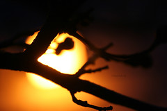 Honey  (Blackcatatheart) Tags: new sky sun sunlight black macro nature up weather silhouette yellow closeup night death dawn twilight branch close dusk silhouettes blurred beginning ethereal twig end outline rebirth twigs climate begin symbolic ending branchs sunlite renarnation