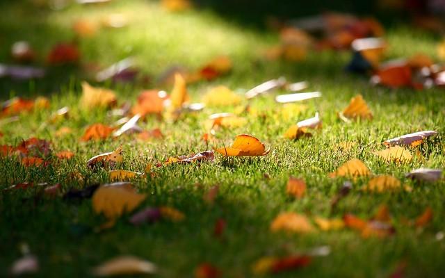 Листья на траве