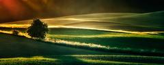 Color/contrast (warmianaturalnie) Tags: light color tree landscape poland fields warmia