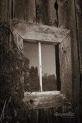 Window (diapaulic) Tags: wood blackandwhite bw texture abandoned window monochrome wisconsin barn blackwhite decay monochromatic weathered wreck weatheredwood distressed decayed abandonement barnboard omot