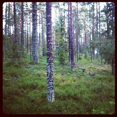 Man kan ta a'stårs ur skogen, men inte skogen ur a'stårs. (TinaOo) Tags: square squareformat hudson iphoneography instagramapp uploaded:by=instagram