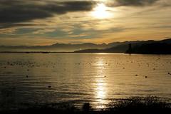 Sonnenaufgang / Sunrise / Morgenstimmung am Hafen von Arbon am Bodensee ( See / Lac / Lake ) im Kanton Thurgau in der Schweiz (chrchr_75) Tags: oktober lake lago schweiz switzerland see suisse swiss herbst lac 1210 christoph svizzera bodensee 2012 suissa chrigu chrchr hurni chrchr75 chriguhurni oktober2012 chriguhurnibluemailch albumzzz201210oktober