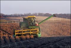 John Deere 4420 (Justin Hardecopf) Tags: harvest iowa combine jd kellogg johndeere 4420